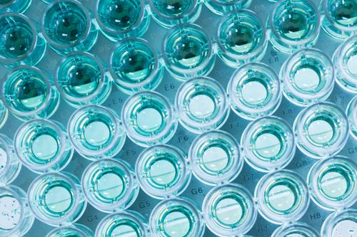 Llei d'investigació biomèdica BTN